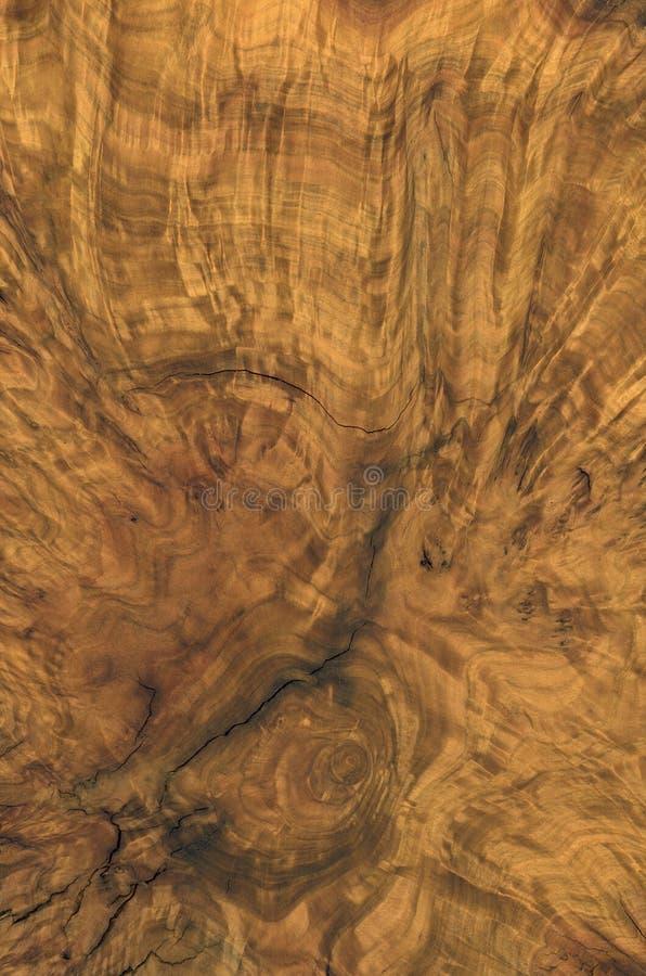 Detalhe da madeira do burl de Brown foto de stock