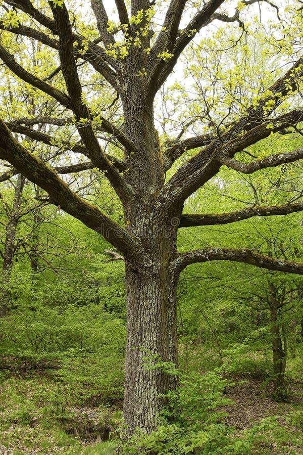 Detalhe das filiais de árvore
