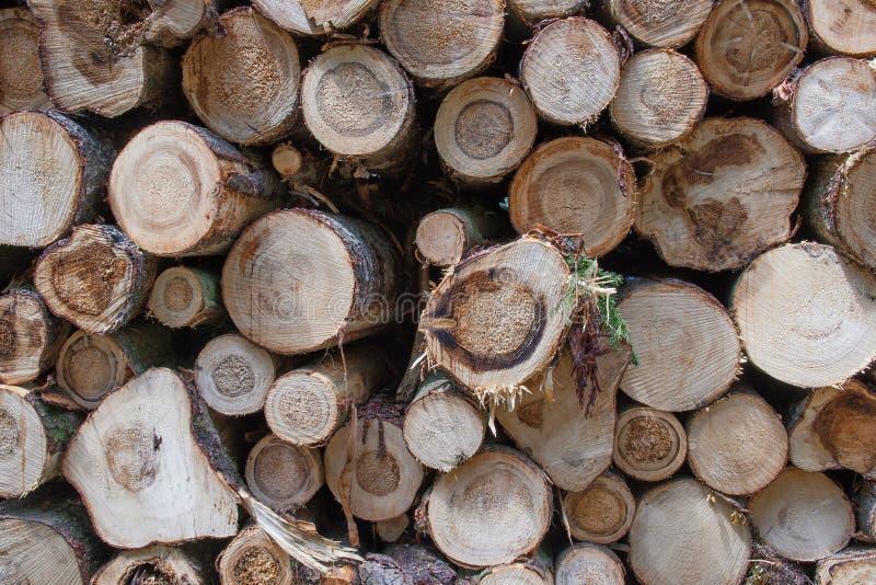 Detalhe de árvores cortadas após a calamidade fotos de stock