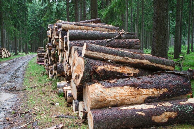 Detalhe de árvores cortadas após a calamidade fotos de stock royalty free