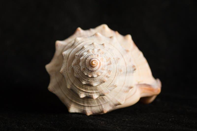 Detalhe de concha do mar espiral foto de stock