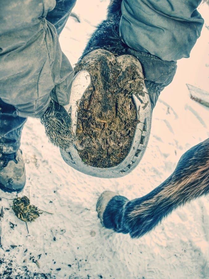 Detalhe de decolar sapatas obsoletas do cavalo dos pés do dobbin foto de stock royalty free