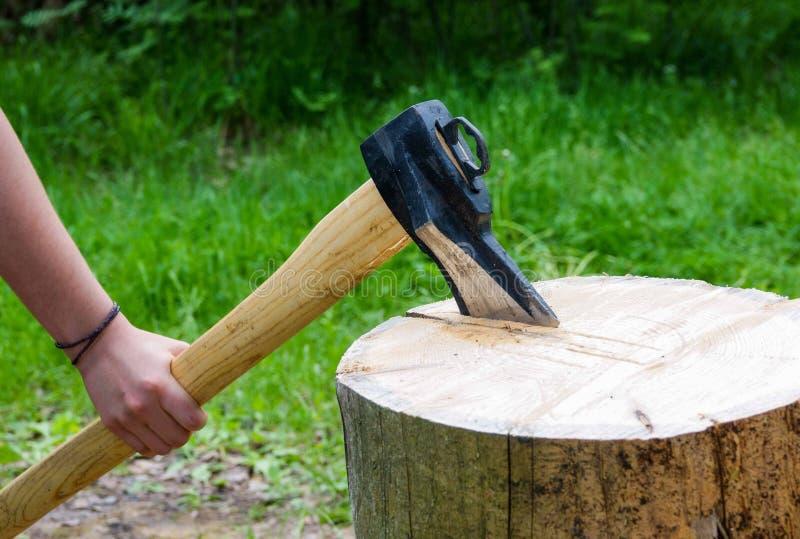 Detalhe de duas partes de madeira de voo no log com serragem fotografia de stock royalty free