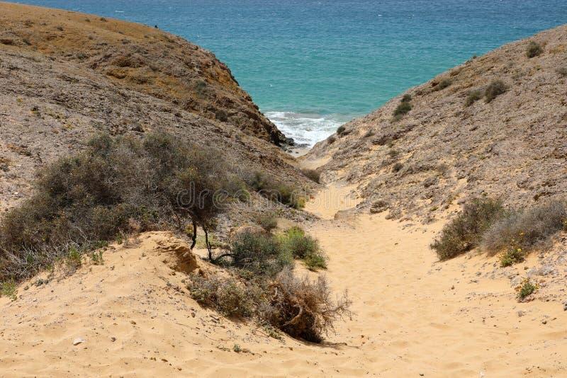 Detalhe de dunas de areia com vegetação em Playas de Papagayo, Lanzarote, Ilhas Canárias fotografia de stock royalty free