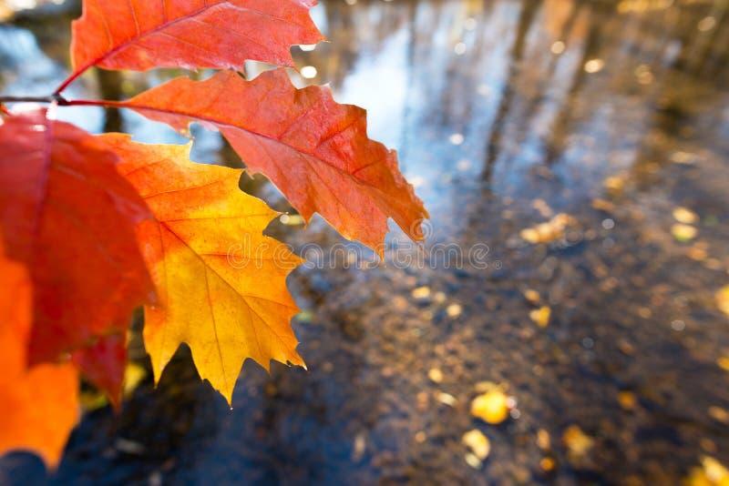 Detalhe de folha no outono fotografia de stock