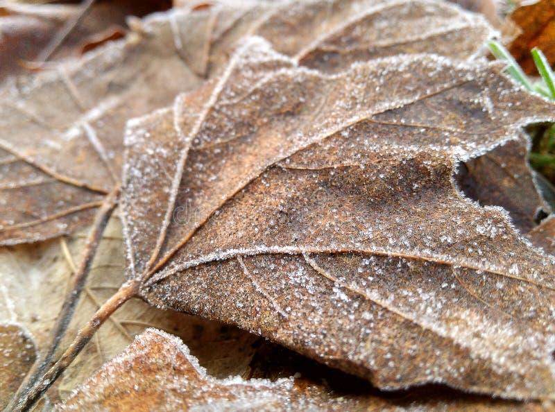 Detalhe de folhas hoarfrosted foto de stock royalty free
