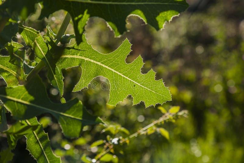 Detalhe de folhas no exterior ao luminoso imagens de stock royalty free