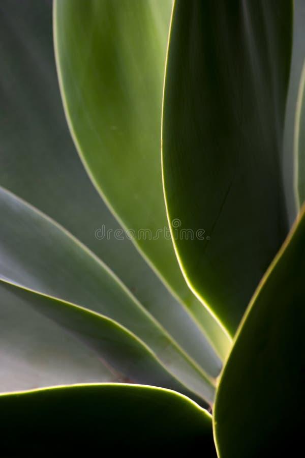 Detalhe de folhas verdes no luminoso fotos de stock