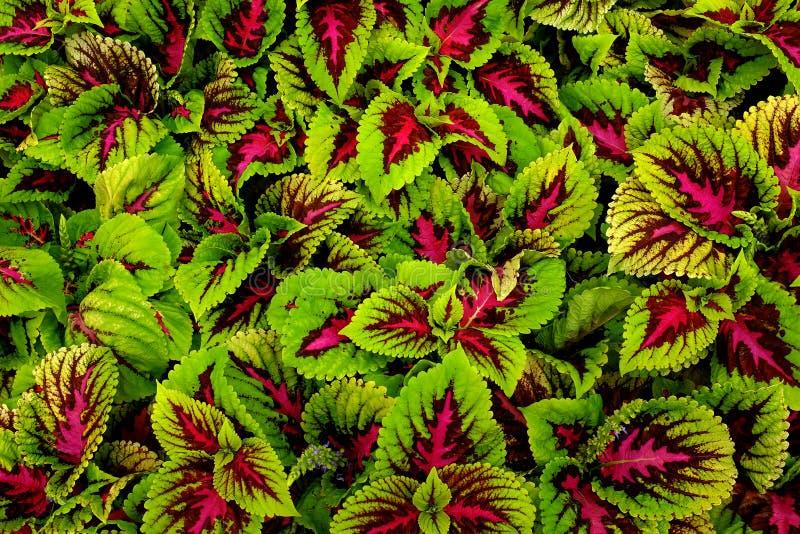 Detalhe de jardim no verão ou mola com flores luxúrias e fotografia de stock royalty free