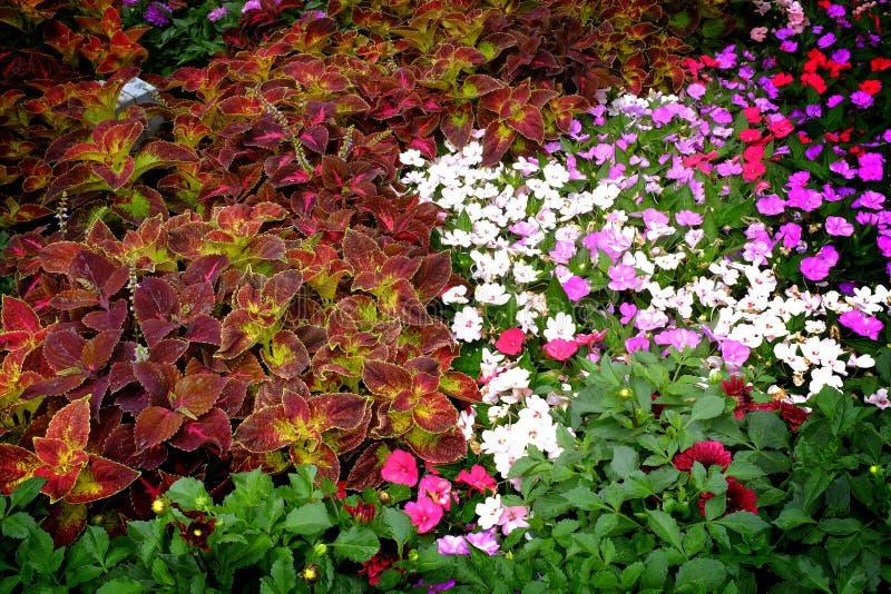 Detalhe de jardim no verão ou mola com flores luxúrias e fotos de stock royalty free