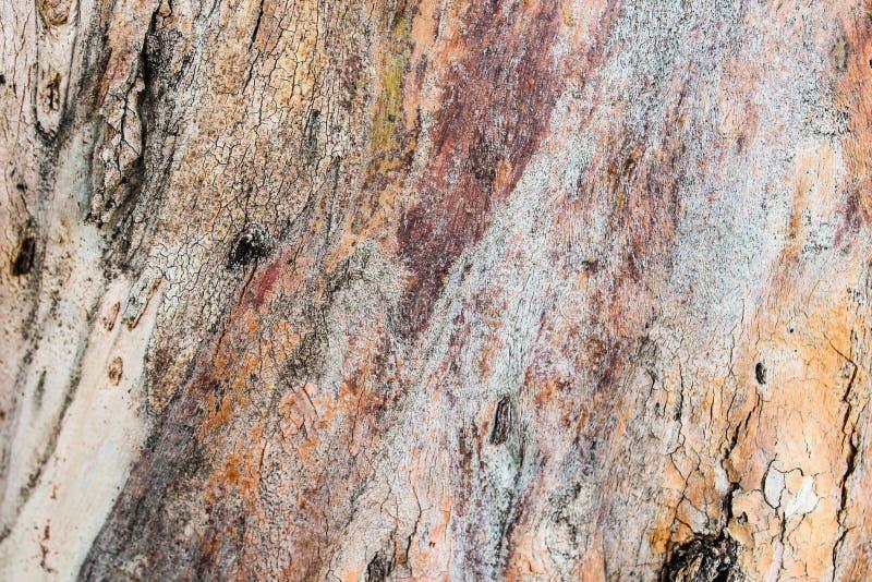 Detalhe de madeira do tronco foto de stock royalty free