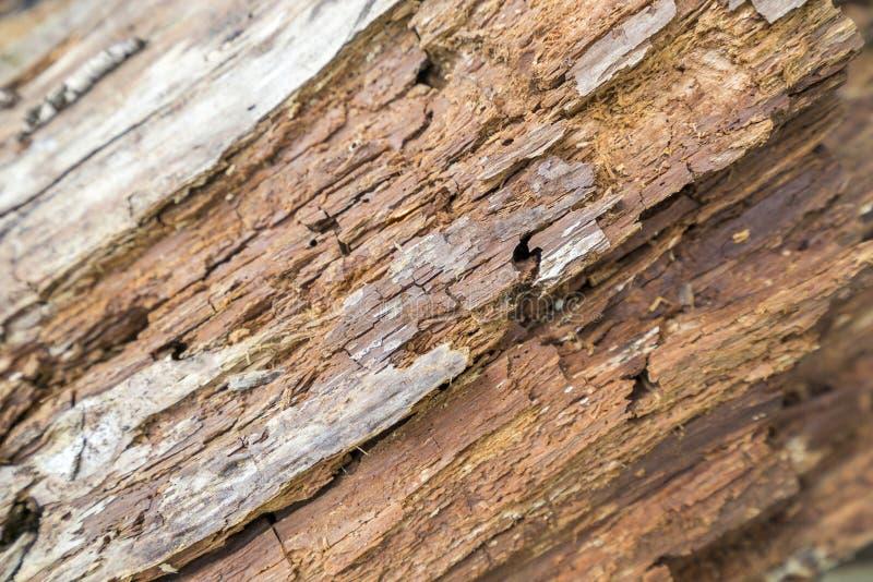 Detalhe de madeira Rotting imagens de stock