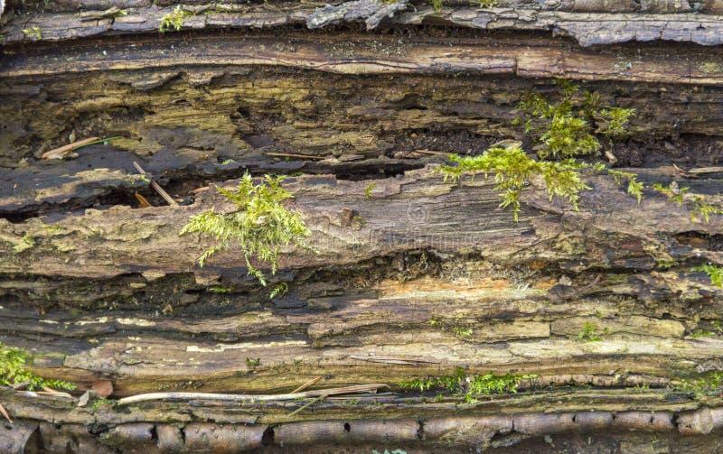 Detalhe de madeira Rotting imagem de stock royalty free