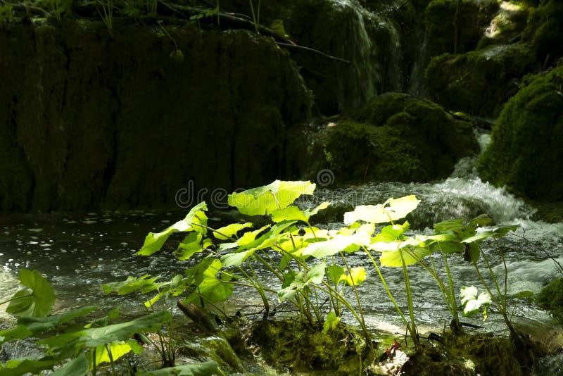 Detalhe de parque nacional de Plitvice foto de stock royalty free