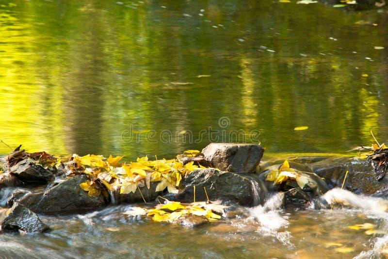 Detalhe de pedras em The Creek fotografia de stock royalty free