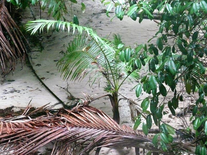 Detalhe de uma angra com as plantas na borda, em parte inoperante na selva imagens de stock royalty free