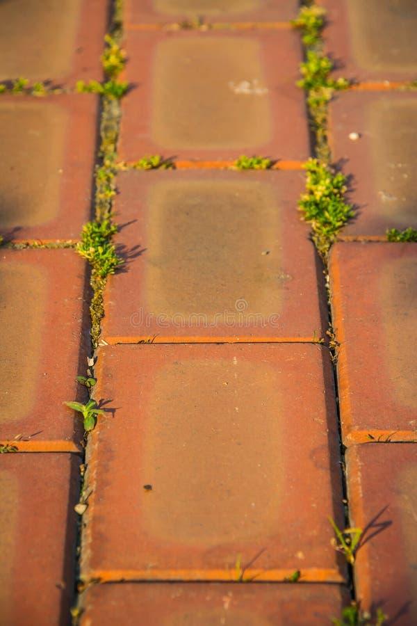 Detalhe de uma estrada alaranjada do tijolo com plantas pequenas fotos de stock royalty free