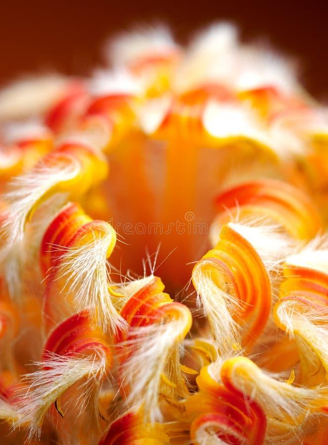Detalhe de uma flor exótica fotos de stock royalty free