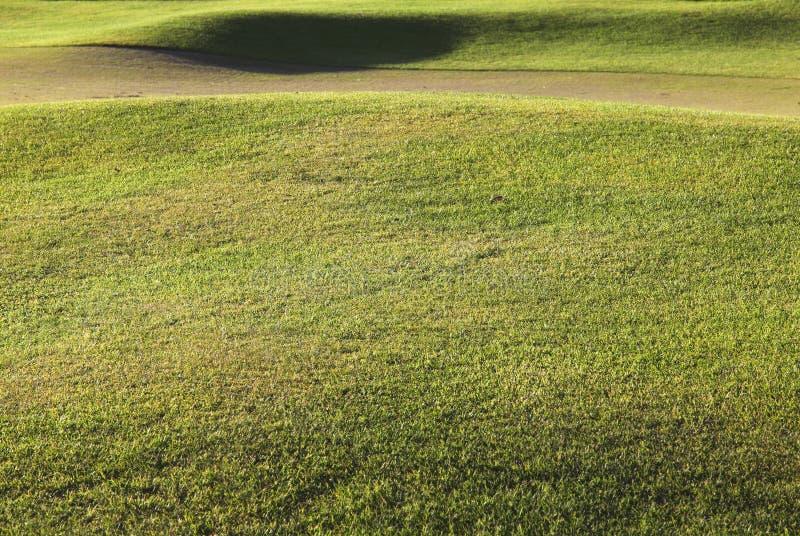 Detalhe de uma grama do campo de golfe fotografia de stock