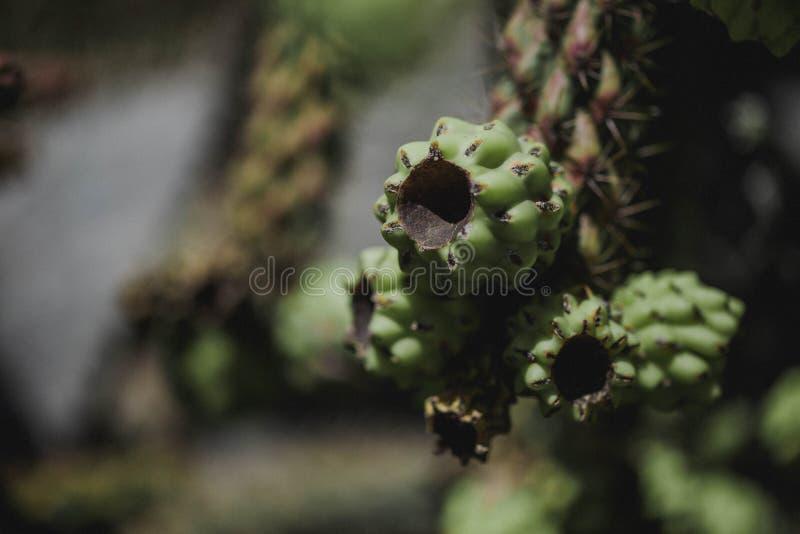 Detalhe do cacto no jardim exótico de Eze imagens de stock