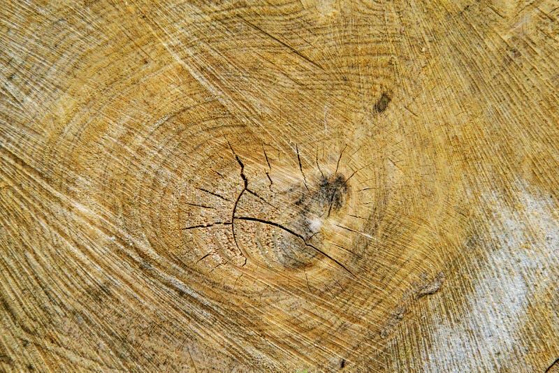 Detalhe do corte da madeira imagens de stock royalty free