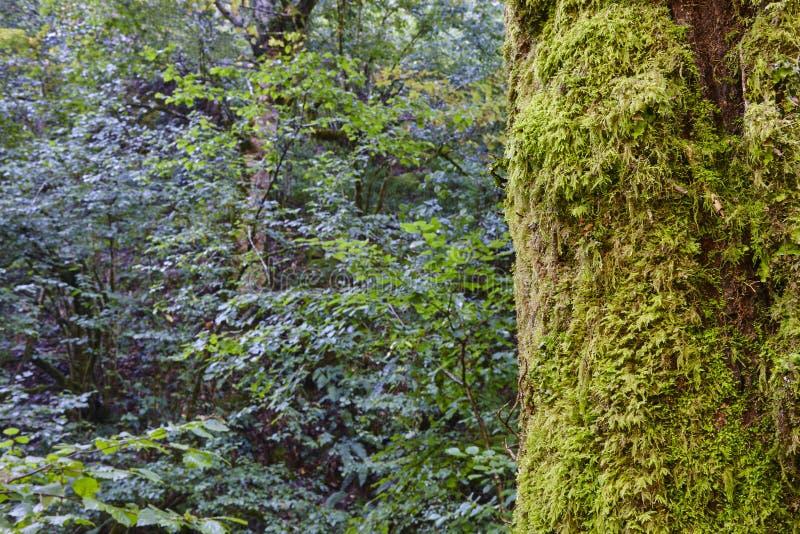 Detalhe do musgo em um tronco de árvore em uma floresta verde imagem de stock