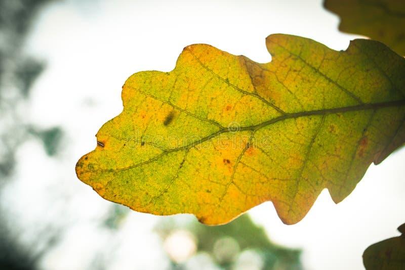 Detalhe do outono da folha foto de stock
