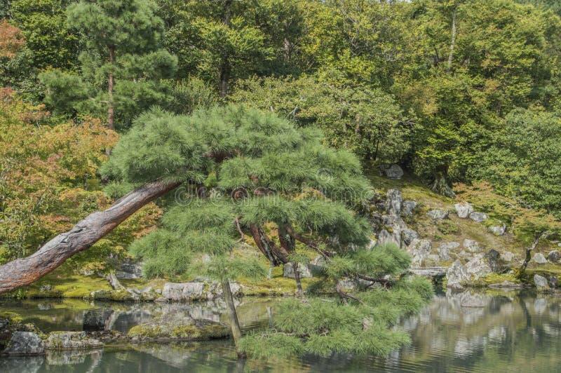 Detalhe do templo Zen Garden At Arashiyama Kyoto Japão de Tenryuji fotos de stock royalty free