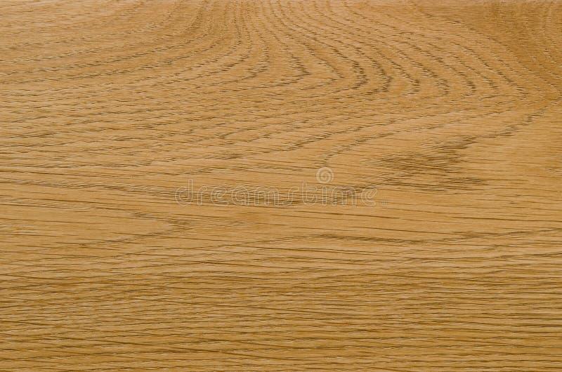 Detalhe do teste padrão da natureza de fundo da madeira da cinza fotografia de stock royalty free