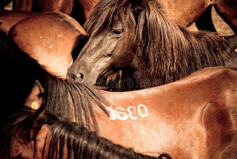 Detalhe dos cavalos imagem de stock royalty free