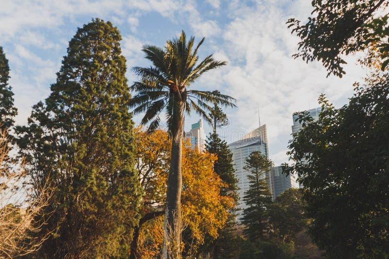 Detalhe dos jardins botânicos reais em Sydney CBD com skyline mim foto de stock royalty free