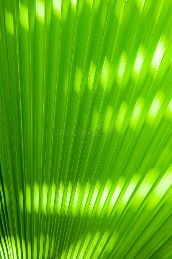 Detalhe em folha de palmeira fotos de stock royalty free