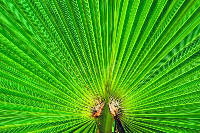 Detalhe em folha de palmeira foto de stock