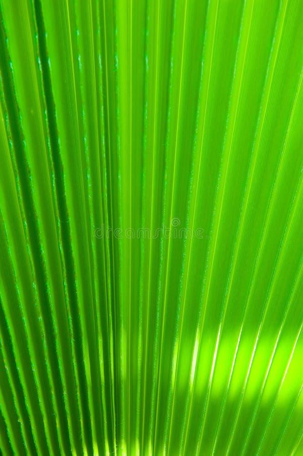 Detalhe em folha de palmeira imagem de stock