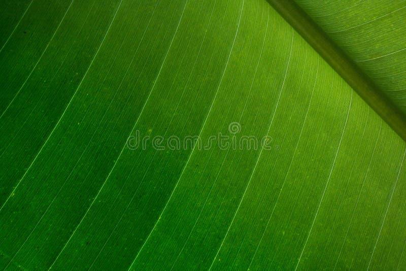 Detalhe em folha de palmeira fotografia de stock