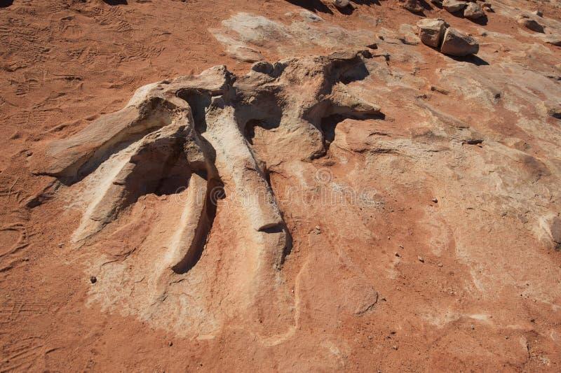 Detalhe fossilizado do esqueleto do dinossauro imagens de stock royalty free