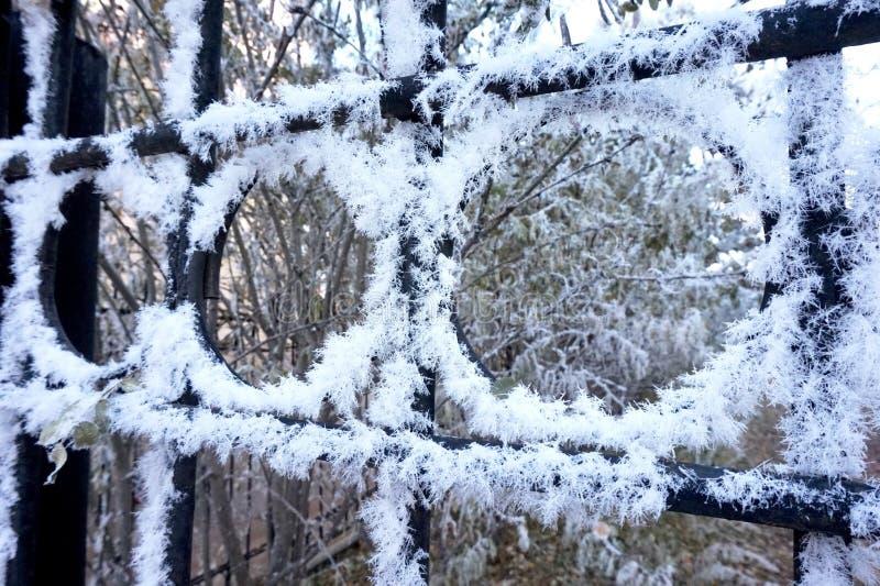 Detalhe gelado de neve exterior do Hoar imagens de stock