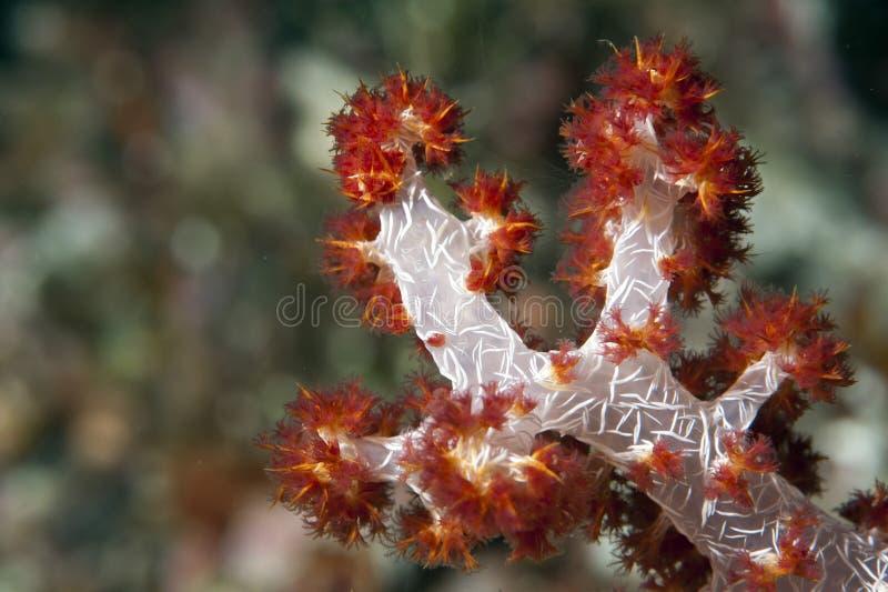 Detalhe macro coral duro fotos de stock