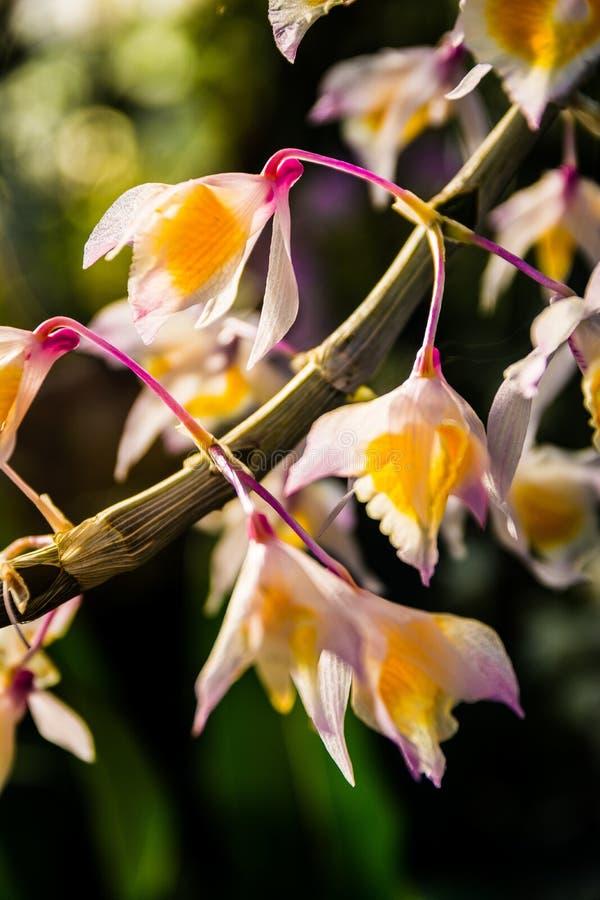 Detalhe macro do ramo cor-de-rosa amarelo branco das flores bonito foto de stock royalty free