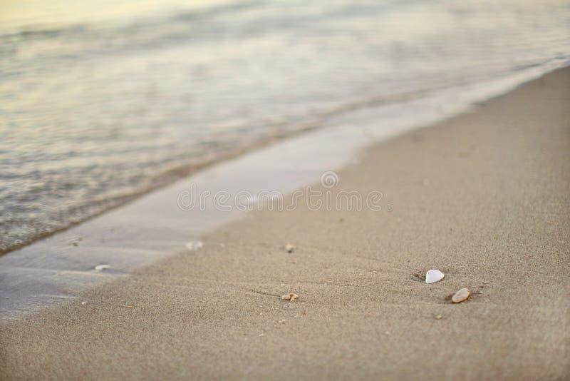 Detalhe na areia molhada na praia, mar borrado no fundo - profundidade rasa da foto do campo - somente concha do mar branca peque imagens de stock