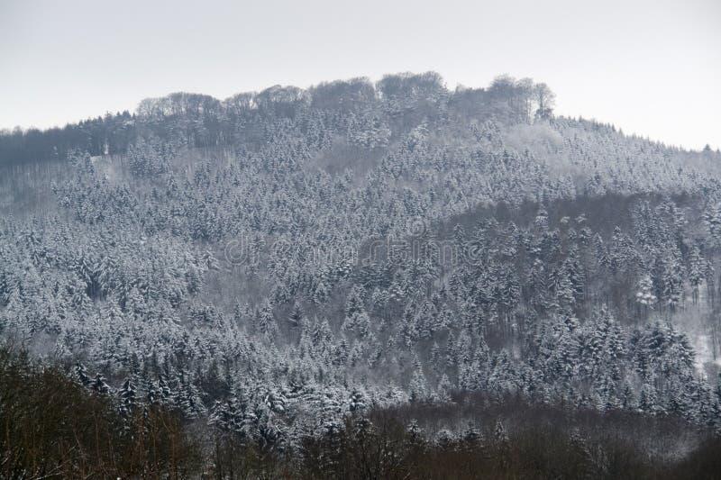Detalhe nevado da floresta imagens de stock