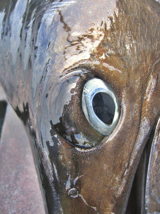 Detalhe - olho do Sailfish fotografia de stock