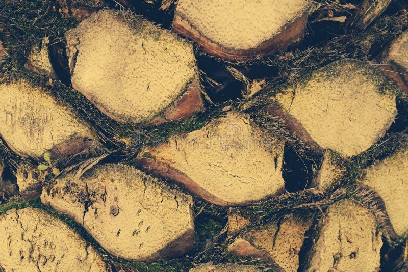 Detalhe superior do tronco de fundo da palmeira imagem de stock