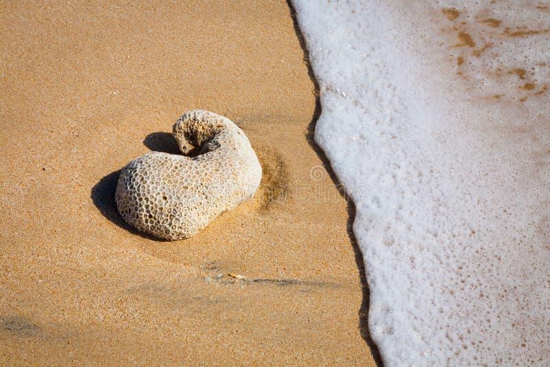 Detalhe tropical surfando bonito da praia da areia foto de stock