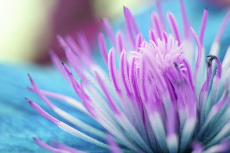 detalhe violeta da flor imagens de stock royalty free