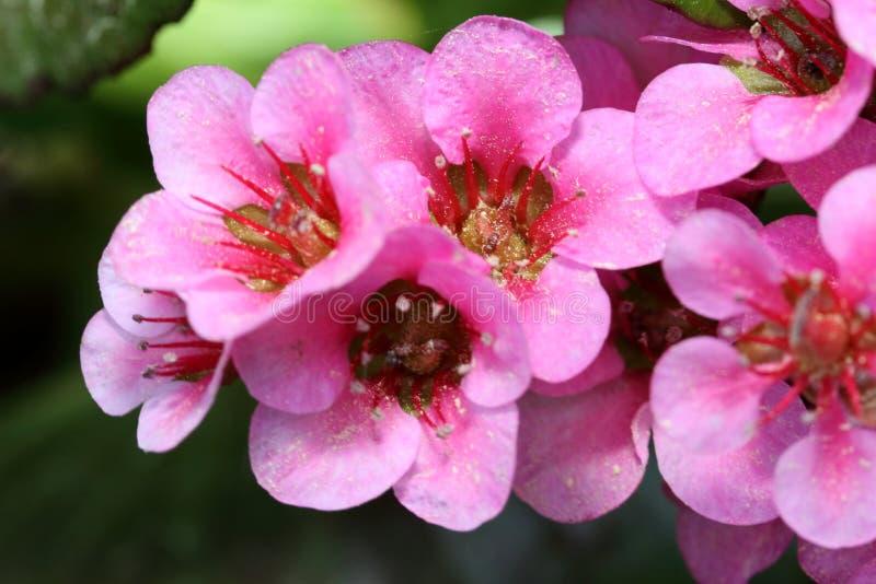 Detalhes cor-de-rosa da flor da flor contra um fundo escuro imagens de stock