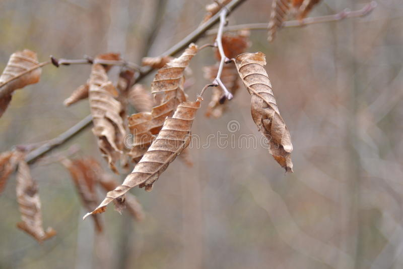 Detalhes das folhas de outono imagens de stock