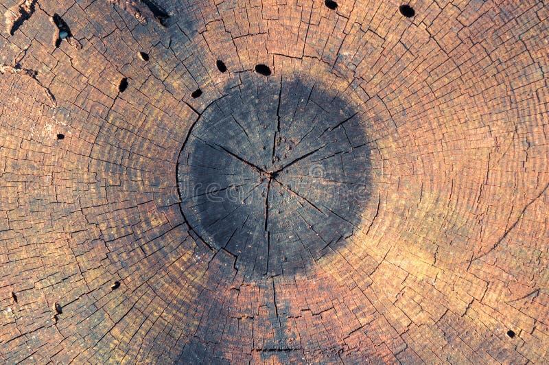 Detalhes de madeira lançada à costa imagens de stock
