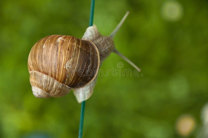 Detalhes de Shell de um escargot movente foto de stock royalty free