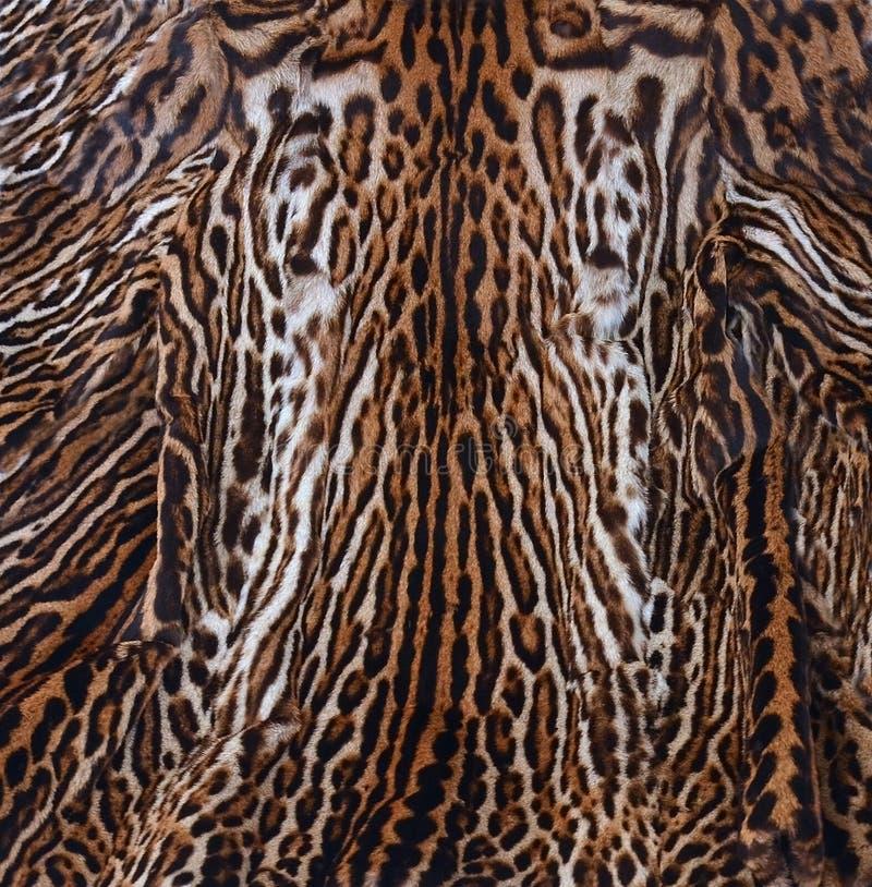 Textura da pele do leopardo fotografia de stock
